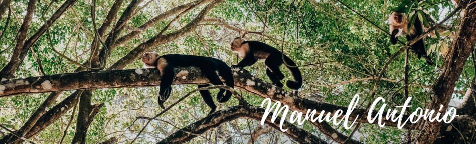Voyage au Costa Rica - singes dans la réserve naturelle de Manuel Antonio